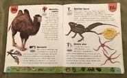 Weird Animals Dictionary (2)