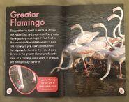 Bizarre Birds (5)