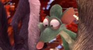 Buddy looking at nuts