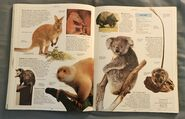 DK Encyclopedia Of Animals (112)