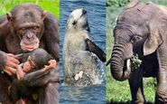 Elephants Dolphins Whales Chimps Gorillas Orangutans Bonobos and Siamangs