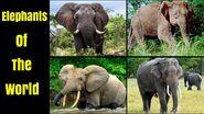 Elephants of the World