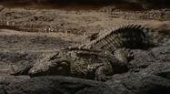 HugoSafari - Crocodile12