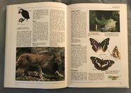 The Kingfisher Illustrated Encyclopedia of Animals (126)
