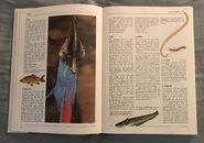 The Kingfisher Illustrated Encyclopedia of Animals (32)