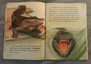 Awesome Animals (Road to Reading) (15)