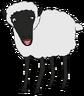 Baa-Baa the Domestic Sheep