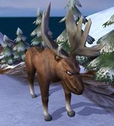 Moose IC