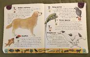 Pet Dictionary (9)