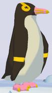 Yellow-Eyed Penguin WOZ