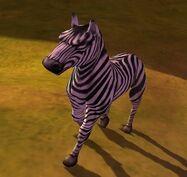 Zebra IC