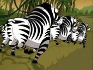 Zebras TV