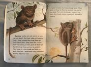 Awesome Animals (Road to Reading) (3)