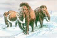Dailymail Mammoths