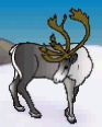 MSB Caribou