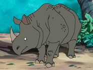 Rileys Adventures Indian Rhinoceros