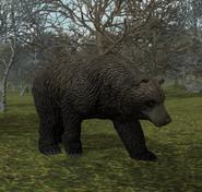 300px-CaveBear2