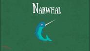 Bonny Wondy Narwhal