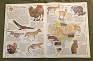 The Animal Atlas (19)
