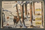 Usborne World Wildlife- Mountain Wildlife (4)