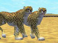 Zt2-cheetah