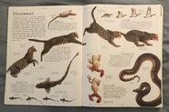 DK Encyclopedia Of Animals (6)
