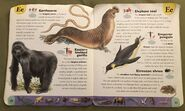 Extreme Animals Dictionary (7)