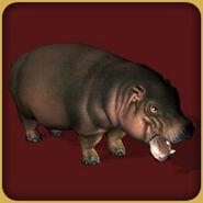 Pygmy Hippopotamus (Blue Fang)