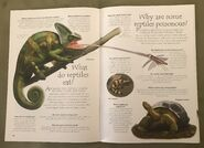 Reptiles (Over 100 Questions and Answers to Things You Want to Know) (4)