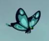 Butterfly TLG