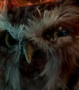 Ezylryb-legend-of-the-guardians-the-owls-of-gahoole-3.7