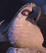 Nigel the Cockatoo