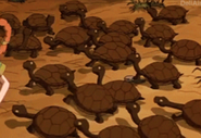 TWT Turtles