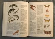 The Kingfisher Illustrated Encyclopedia of Animals (106)