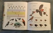 Visual Dictionary of Animals (92)