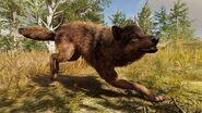 Acodyssey wolf by giuseppedirosso dcp36wu