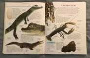 DK Encyclopedia Of Animals (66)