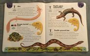 Reptiles and Amphibians Dictionary (17)