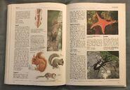 The Kingfisher Illustrated Encyclopedia of Animals (153)