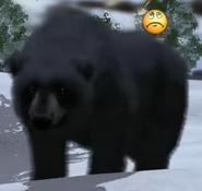 Wildlife Park Black Bear