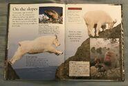 Mammals (Eye Wonder) (15)