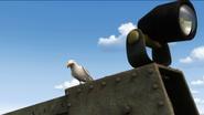 TTTE Seagull