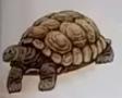 Tortoise usborne my first thousand words