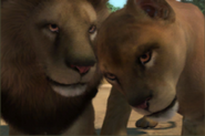 Barbary-lion-ztuac