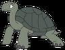 Bentley the Galapagos Tortoise