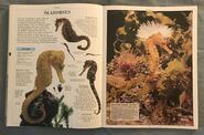 DK Encyclopedia Of Animals (145)