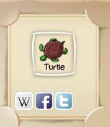 IMG turtle