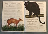 Jungle Animals (Over 100 Questions and Answers to Things You Want to Know) (4)