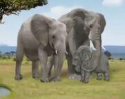 TWP! African Elephants