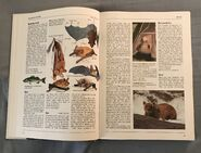 The Kingfisher Illustrated Encyclopedia of Animals (14)